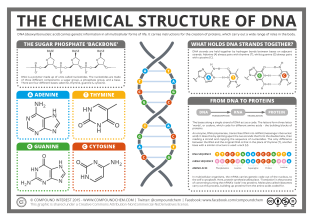 Chemical-structure-of-DNA
